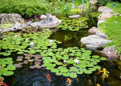 Large Pond PCB Waterscapes in Healesville